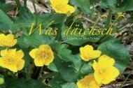04_was_daeichsch
