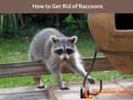 Get Rid of Raccoon in Atlanta Georgia