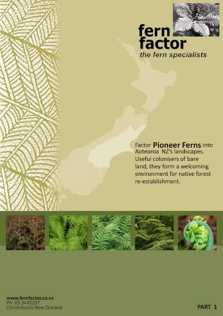 Pioneer Ferns - Part 1