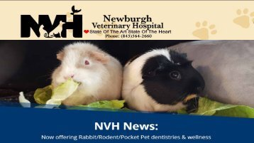 Veterinarian Newburg