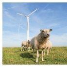 Windenergie und Naturschutz - Page 4