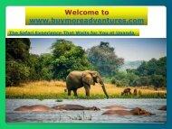 Safari Experience That Waits for You at Uganda