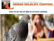 How to Get Rid of Birds in Atlanta Georgia