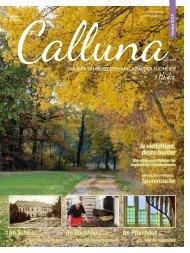 Calluna Herbst 2019