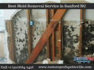 Mold Removal Service in Sanford NC