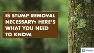 Is Stump Removal Necessary? Here's What You Need To Know.