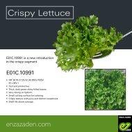 Leaflet Crispy Lettuce E01C.10991