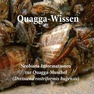 Quaggamuschel-Wissen