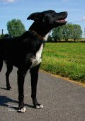 Alles over Honden - Mars - Page 2