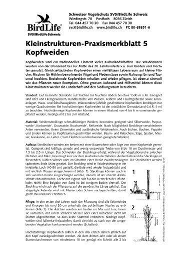 Kleinstrukturen-Praxismerkblatt 5 Kopfweiden