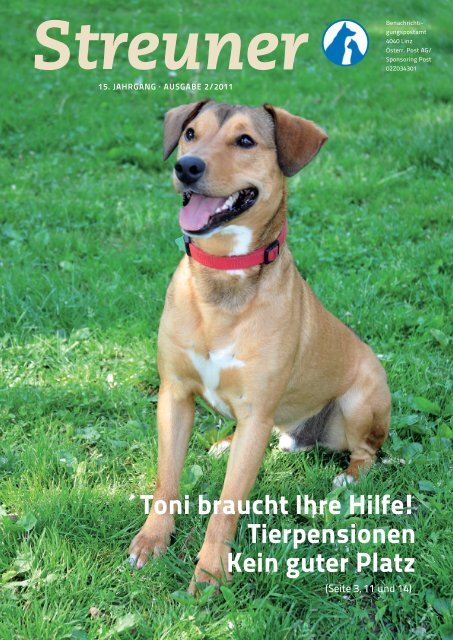 Toni Braucht Ihre Hilfe Tierpensionen Kein Guter Platz Tierheim Linz