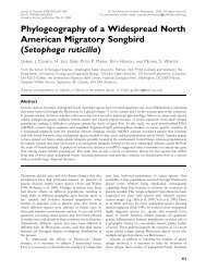 Phylogeography of a Widespread North American Migratory Songbird