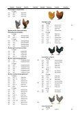 Katalog LV-Schau 2008 Einzeltiere - Mayer Eugen - Page 5