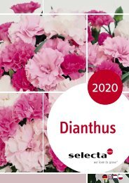 selecta Dianthus 2020 NE-NL