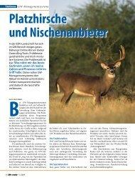 Platzhirsche und Nischenanbieter - WebMobil24.com