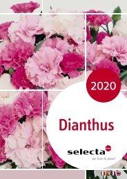 selecta Dianthus 2020 SE-Hellas