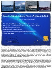 Blue whale Camp Pico, Acores 2012 - Wirodive