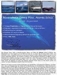 Blue whale Camp Pico, Acores 2012 - Scuba Azores