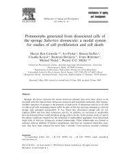 Suberites domuncula - Instituto de Biociências da USP