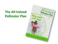 Junior-Pollinator-Plan-presentation