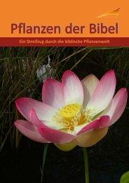 Bibelpflanzen