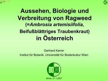Common Ragweed Ambrosia artemisiifolia - Burgenland.at