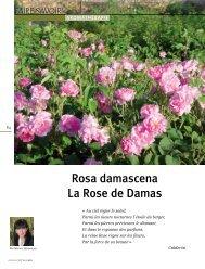 Rosa damascena La Rose de Damas