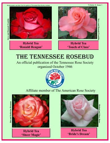 Hybrid Tea - Tennessee Rose Society