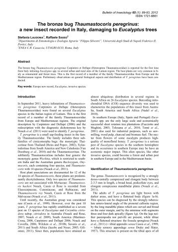 The bronze bug Thaumastocoris peregrinus - Bulletin of insectology