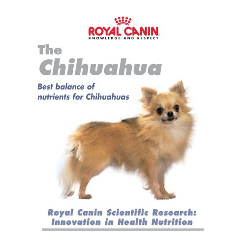 probleme articulare chihuahua)