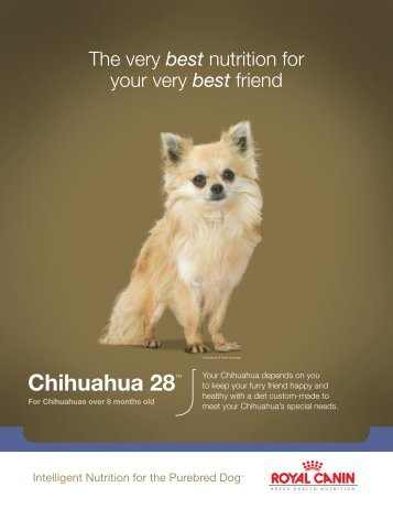 Chihuahua 28™ - Royal Canin USA