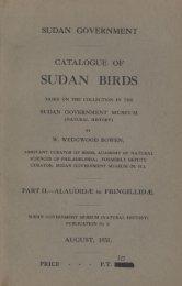 SUDAN BIRDS