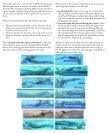 COMPETITION NUTRITION: - Clovis Swim Club - Page 4
