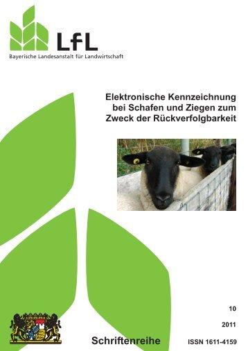 Elektronische Kennzeichnung bei Schafen und Ziegen zum Zweck