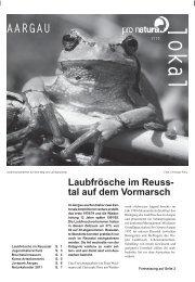 Laubfrösche im Reuss- tal auf dem Vormarsch - Pro Natura Aargau