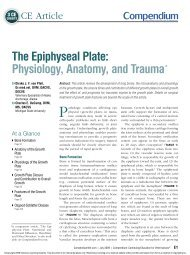The Epiphyseal Plate: Physiology, Anatomy, and ... - VetLearn.com