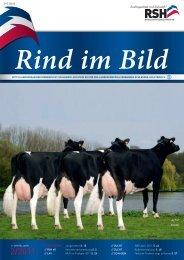 // Rind im Bild 2/2011 1 - Rinderzucht Schleswig-Holstein e.G.