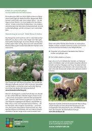 """Schafe - Landschaftspflege mit Rassenvielfalt - Kampagne """"Vielfalt ..."""