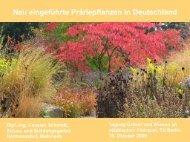 Neu eingeführte Präriepflanzen in Deutschland - TU Berlin