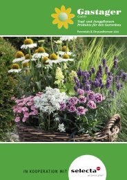 selecta Perennials and Chrysanthemum 2021 Gastager