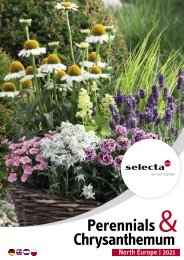 selecta Perennials and Chrysanthemum 2021 North Europe