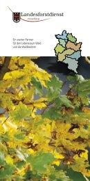 Broschüre Landesforstdienst - Vorarlberg