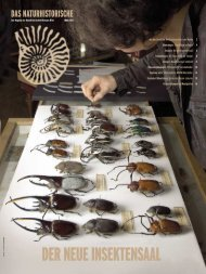 Winter 2004 - Naturhistorisches Museum Wien