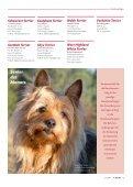 Terrier - Klub für Terrier e.V. - Seite 4