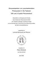 Die Faktoren IdiA und 2-Cystein-Peroxiredoxin - Ruhr-Universität ...