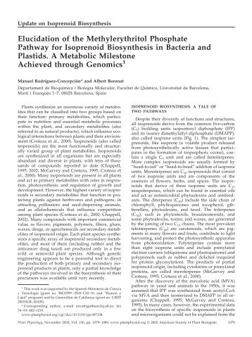 Elucidation of the Methylerythritol Phosphate ... - Plant Physiology