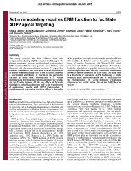 Actin remodeling requires ERM function to facilitate AQP2 apical ...