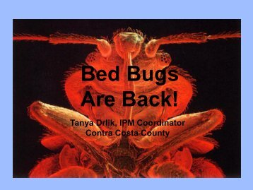 Bed Bugs Are Back - Contra Costa Health Services