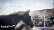Racing Welfare- Covid19 Information and Support