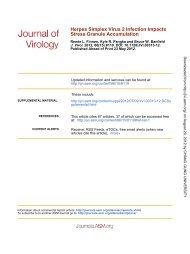 Stress Granule Accumulation Herpes Simplex Virus 2 Infection Impacts